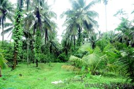 Agricultural land for Sale in Mangalore   Buy Agricultural