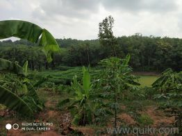 Agricultural land for Sale in Kollam   Buy Agricultural land