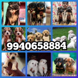 Pets Pet Care Products In Www Puppy Care Dogs Cat Care Tips And Services Quikr Www