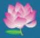 Padmalaya Properties - Logo